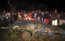 Krokodil 1